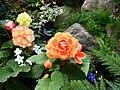 Butchart Gardens - Victoria, British Columbia, Canada (28776831700).jpg