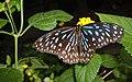 Butterflies Farm - panoramio (1).jpg