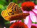 Butterfly-Flower ForestWander.jpg