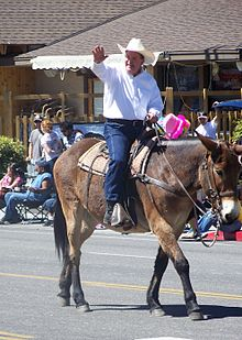Roy Ashburn riding in the annual Bishop Mule Days parade
