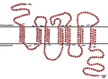 CCR5 Primary Protein Sequence.png