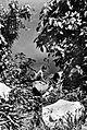 COLLECTIE TROPENMUSEUM Een Manadonese vrouw wast zich in het meer van Tondano Minahasa Noord-Celebes TMnr 10002844.jpg
