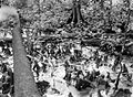 COLLECTIE TROPENMUSEUM Mangrove op Noesa Kambangan TMnr 10027535.jpg