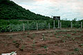 CSIRO ScienceImage 632 Australian Hardwood Trial Plantation Thailand.jpg