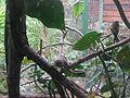 Cali Zoo 28-02-14 07.JPG