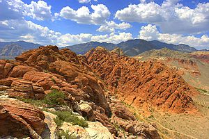 Mojave Desert - Calico Basin in Red Rock National Conservation Area near Las Vegas