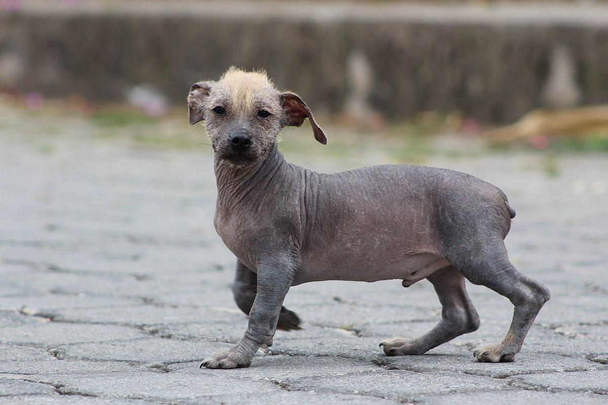 Dog Collar Bald Spot Throat