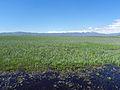 Camas Prairie Centennial Marsh.JPG