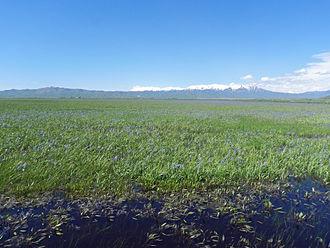 Soldier Mountains - Image: Camas Prairie Centennial Marsh