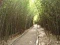 Caminho por entre o bambú - bamboo in the park -竹子在公園 - бамбука в парке - पार्क में बांस - الخيزران في الحديقة - panoramio.jpg
