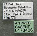 Camponotus crassus casent0173406 label 1.jpg