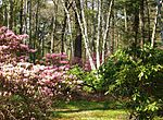 Case Estates, Weston, MA - Rhododendron Garden.JPG