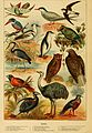 Cassell's natural history (Figure(s)) (7050791197).jpg