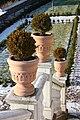 Castle Gardens, Lisburn, November 2010 (26).JPG