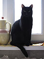 Cat with a jug at the window.jpg