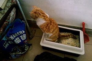 Litter box - A cat using a silica filled litter box. Notice the raised sides of the box which reduces spillage of litter.