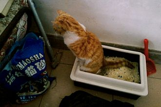 Litter box - A cat using a silica-filled litter box with raised sides of the box to reduce spillage of litter