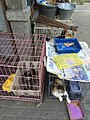 Cats sold in Pasty Market.jpg