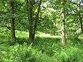 Catter Wood - geograph.org.uk - 1915404.jpg
