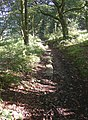 Causey stones (1), Binns Lane, Southowram - geograph.org.uk - 260840.jpg