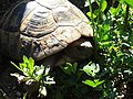 Center for turtle reproduction, Bulgaria 003.JPG