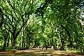 Center park - panoramio.jpg
