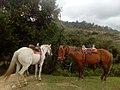 Cerca del embalse de guatavita - caballos.jpg