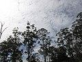 Ces arbres qui vous accueillent à Makor dans l'Adamawa!.jpg