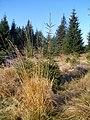 Cestou na Smrk - panoramio (1).jpg
