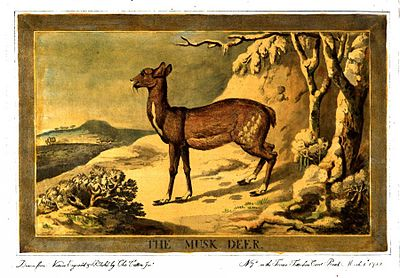 Charles Catton, Animals (1788) Page30 Image1.jpg