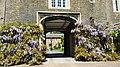 Charterhouse wisteria.jpg