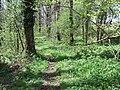 Chenson woods - geograph.org.uk - 162519.jpg