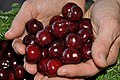 Cherries cerezas Valle del Jerte 02.JPG