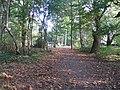 Chestnut time, Crackley Wood - geograph.org.uk - 585496.jpg