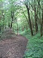 Churchtown Woods - geograph.org.uk - 825200.jpg