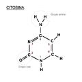 Citosina.png