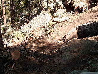 Poudre Wilderness Volunteers - Tree removed from Grey Rock trail