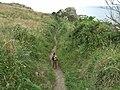 Coastal path - geograph.org.uk - 1406867.jpg
