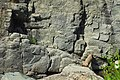 Cogne cascate lillaz (7).jpg