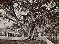 Collectie NMvWereldculturen, RV-A131-16, Foto, 'Een waringinboom op een huiserf in Gang Scott (Batavia) met op de achtergrond de Armeense kerk', fotograaf Woodbury & Page, ca. 1870.jpg