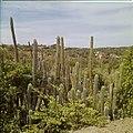 Collectie Nationaal Museum van Wereldculturen TM-20029570 Gezicht op het landschap met bebouwing en cactussen in de omgeving van Sabana Grandi Aruba Boy Lawson (Fotograaf).jpg