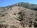Colorado Trail - panoramio.jpg