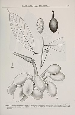 Contributions from the United States National Herbarium (2006) (20501957959).jpg