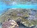 Coral in Raja Ampat.jpg