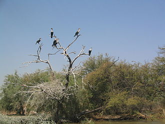 Djoudj National Bird Sanctuary - Image: Cormorans Djoudj
