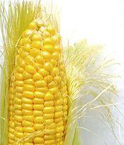 Template talk:American cuisine/Archive 1 - Wikipedia