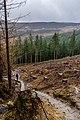 County Wicklow - Glendalough - 20190219021037.jpg