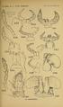 Craspedosomatidae of North America 1895 Plate X.png