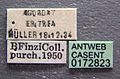 Crematogaster aegyptiaca casent0172823 label 1.jpg