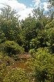 Crigger Creek carrying drainage from Little Dry Run Wilderness, along Crigger Creek Road near Speedwell, Va.jpg